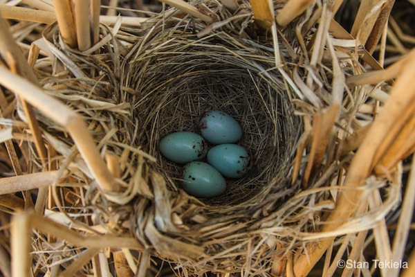 amazing bird eggs