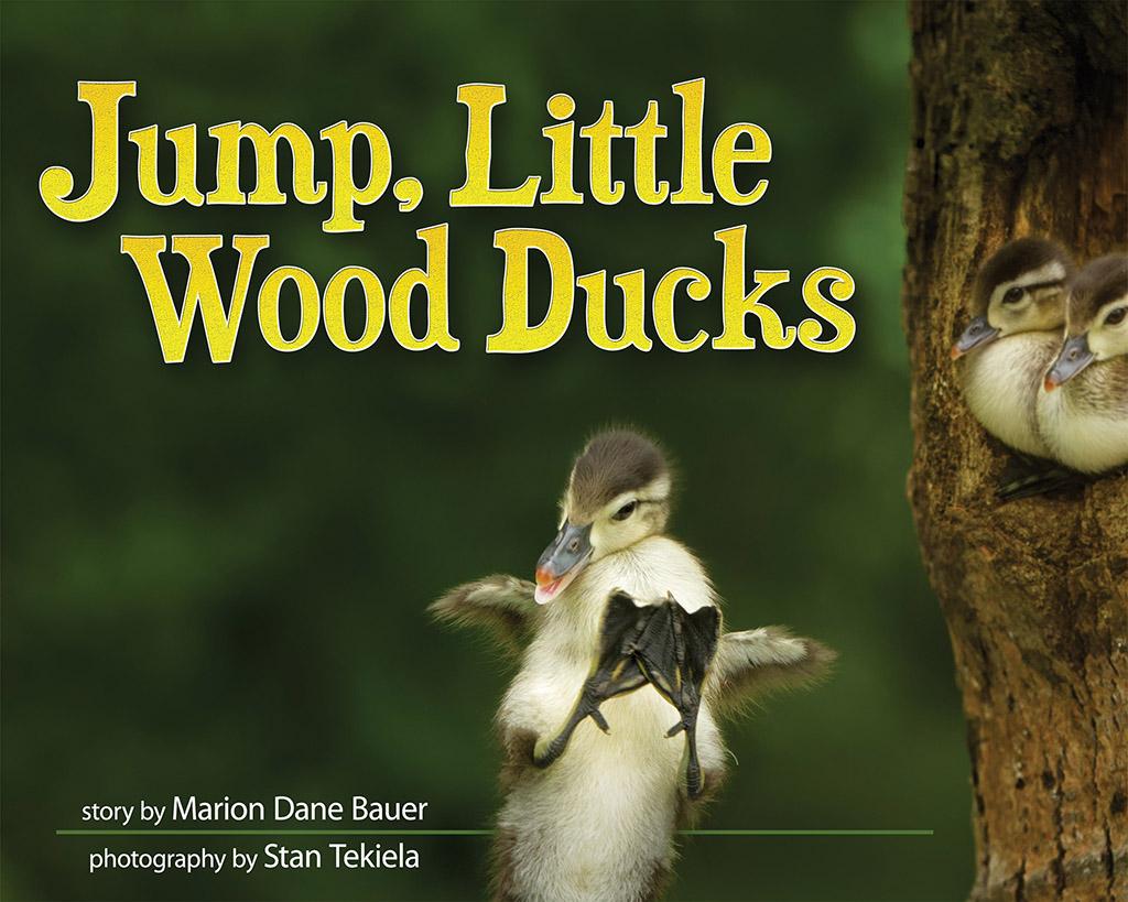 wood ducks